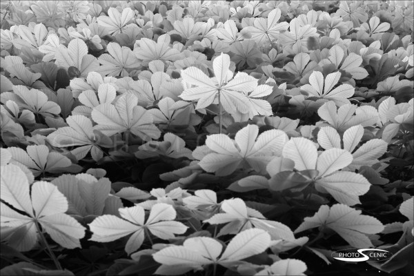 Flora_black_and_white_photos_005.jpg