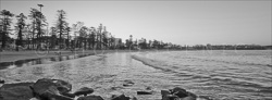 Manly_Panoramic_BW_Photos009.jpg