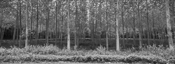 Nature_Panoramic_BW_Photos005.jpg