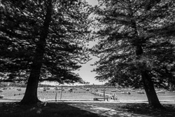 Forty-Baskets-Beach-Manly007.jpg