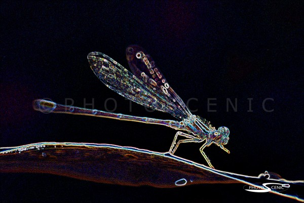 Dragon_Fly_044.jpg