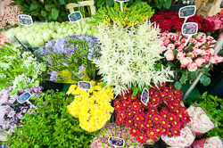 Market_Display_in-France_Colour_Photos_009.jpg